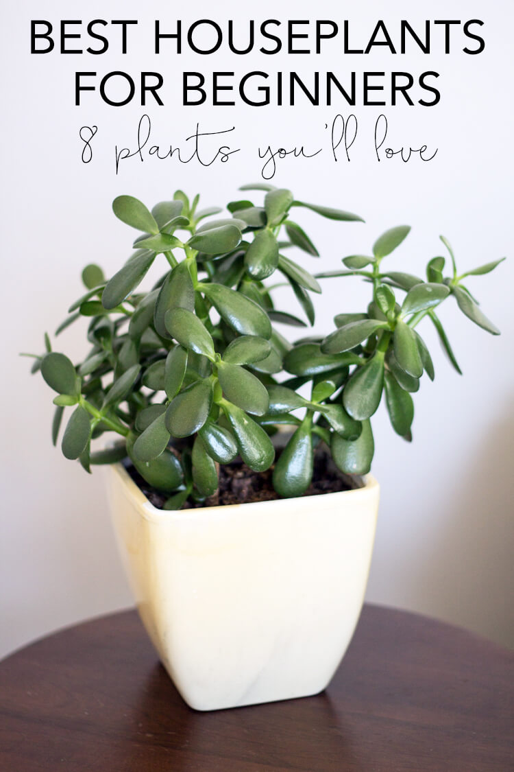 Common House Plants for Beginners 8 Plants Youll Love