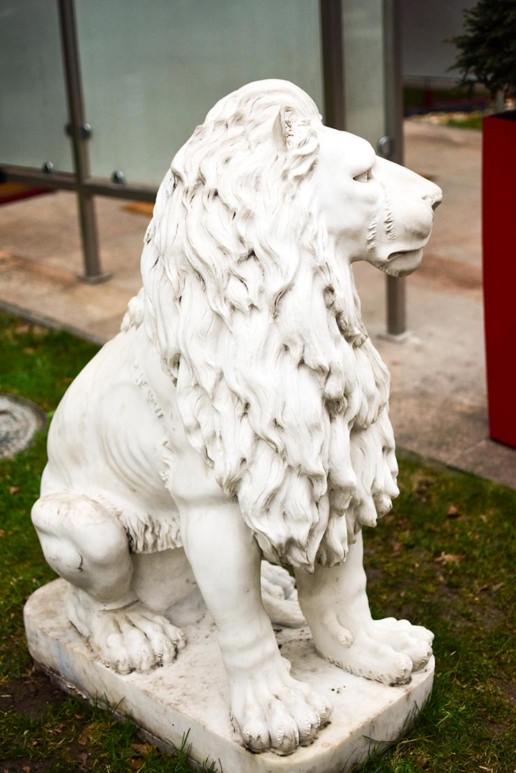 Lion's Garden