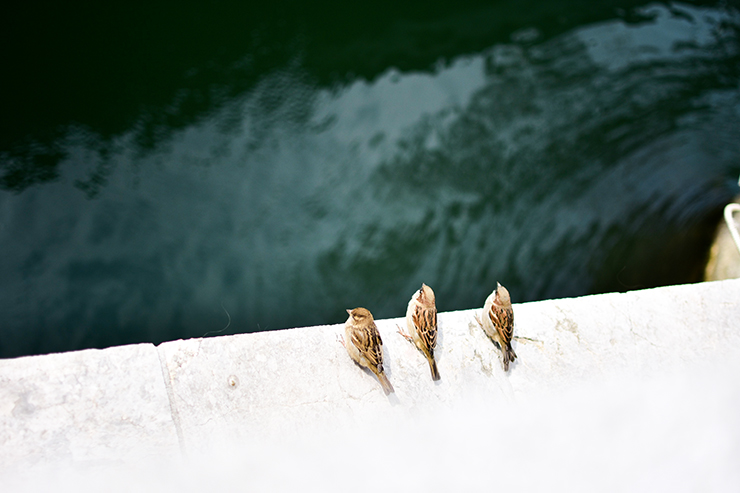 Vögel3