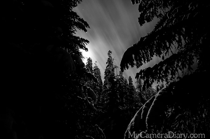 Seattle Photo   Deep In The Woods At Night