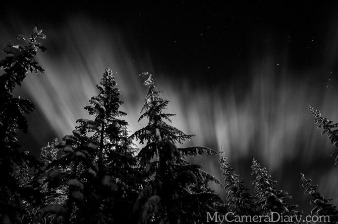 Seattle Photo    Stillness Is Just An Illusion