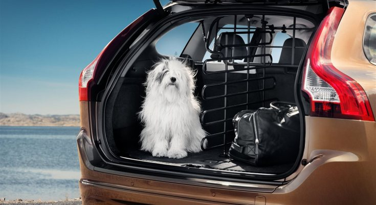 5 Essential Car Safety Tips for Pets
