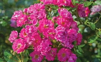 Garden Media Group Features New Plants and Products for Spring 2020