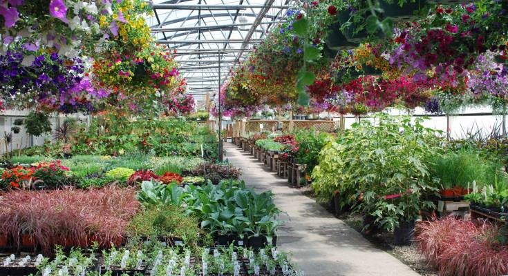 Pennsylvania Farm Bureau Calls on Administration to Allow Garden Centers to Open
