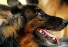 Chester County Sheriff's Office Reveals Names of New K-9s