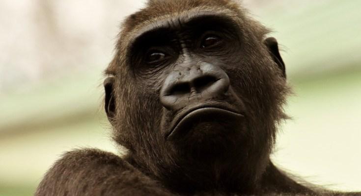 """Monkey """"Stockpile"""" Proposal"""