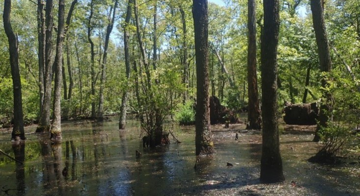Chester-Choptank Watershed