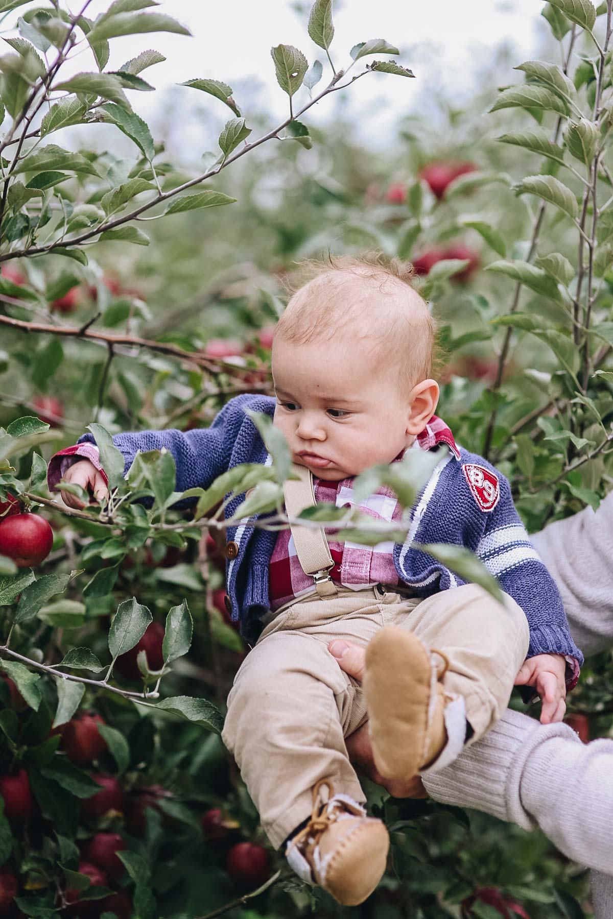 apple orchard fall photos