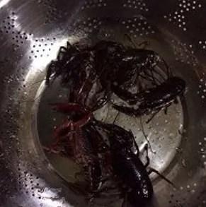 Chongqing Hot Pot flavor Crayfish Recipe Step2