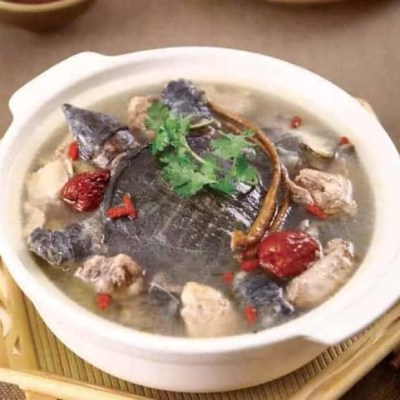 Nourishing Softshell Turtles Hot Pot Recipe