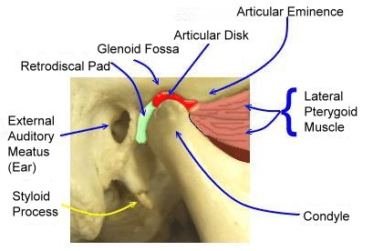 close in view of jaw joint anatomy and articular disc