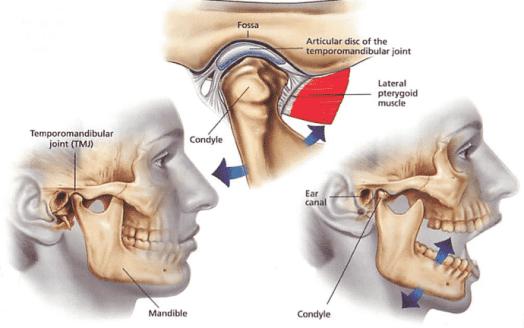 temporomandibular joint motion & articular disc of jaw joint
