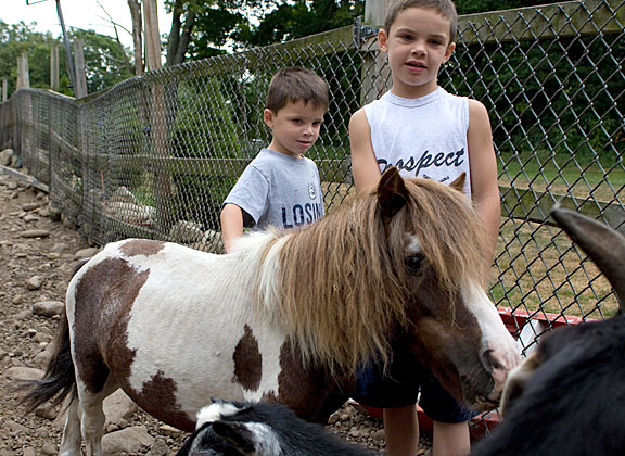 Kole Molcyk, 5, left, and Jace Molcyk, 6, pet a minature pony on their aunt's farm in Prospect. Their aunt, Kelly Cronin, is planning to build a petting zoo and farm stand on her Spring Road property.