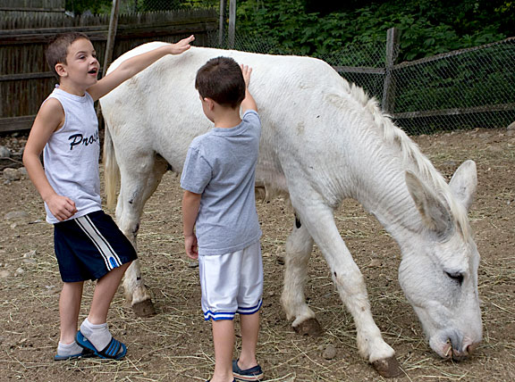 Kole Molcyk, 5, right, and Jace Molcyk, 6, show off the animals on their aunt's farm in Prospect. Their aunt, Kelly Cronin, is planning to build a petting zoo and farm stand on her Spring Road property.