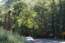 A tree rests on a wire hanging out over Route 68 in Prospect Monday morning. - LARAINE WESCHLER