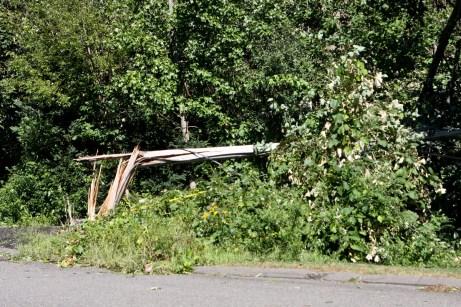 A telephone pole snapped on Luke Street in Prospect. - LARAINE WESCHLER