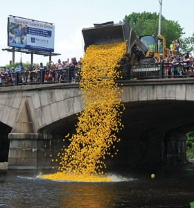 Rubber ducks are dumped off the Whittemore Bridge in Naugatuck to start the duck race last year. –FILE PHOTO