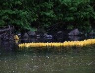 duck23