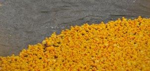 SLIDE_Duck
