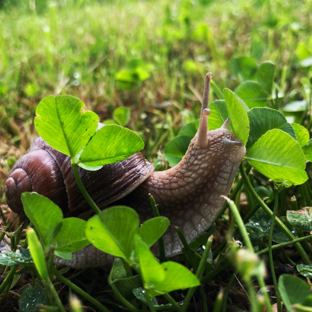 slimak w trawie