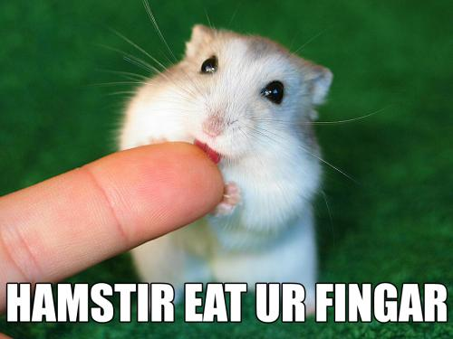 hamstir-eat-ur-fingar.jpg