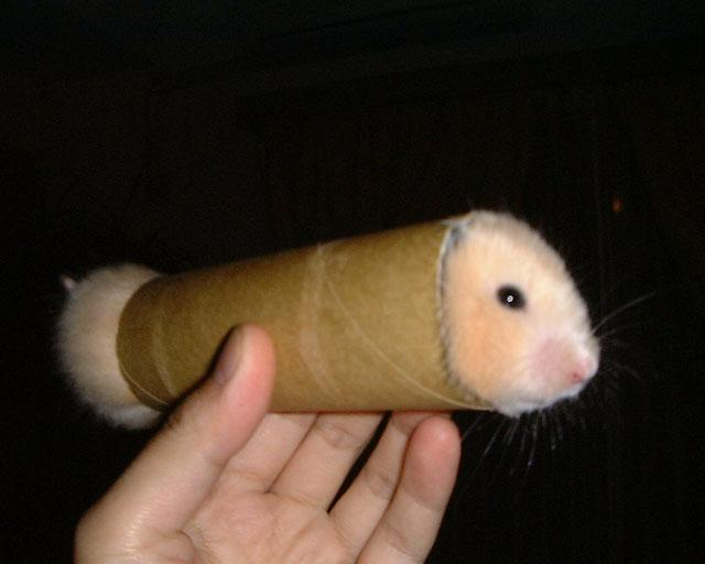 ready-to-roll-gerbil.jpg