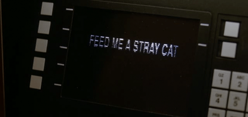 feed-me-stray-cat.png