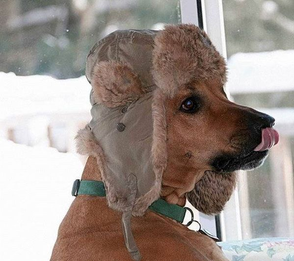 doggy-hat.jpg