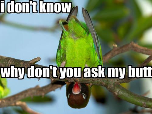 ask-my-butt.jpg