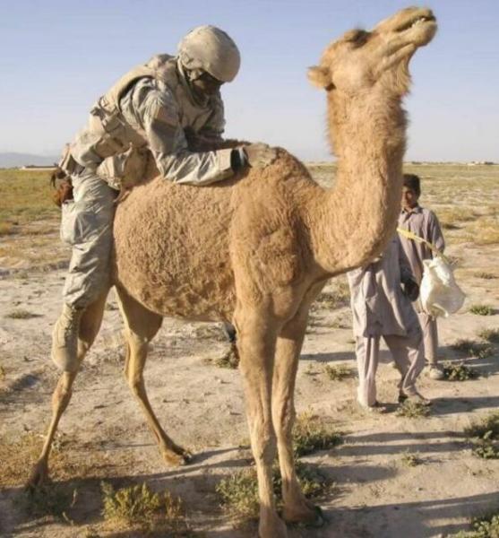 camel-rider.jpg