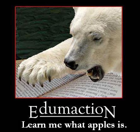 polar-bear-edumaction.jpg