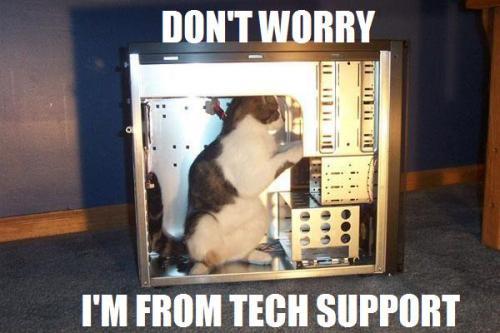 tech-support-cat1.jpg