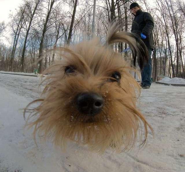 doggy-nose.jpg