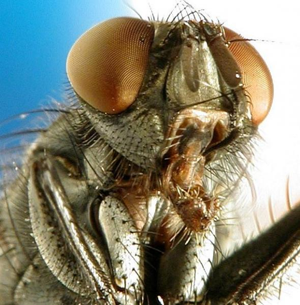 insect-face.jpg