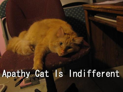 Apathy Cat is Indifferent