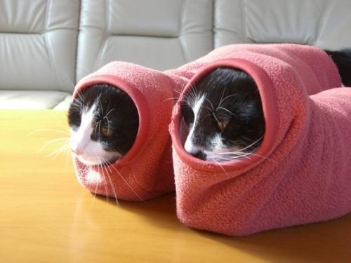 sock-cats.jpg