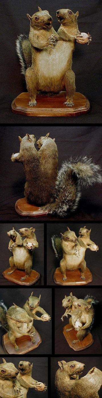 conjoinedsquirrels.jpg