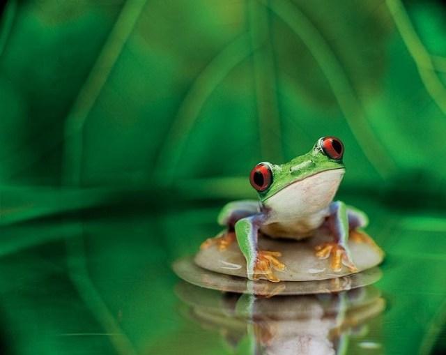 cute-frog.jpg