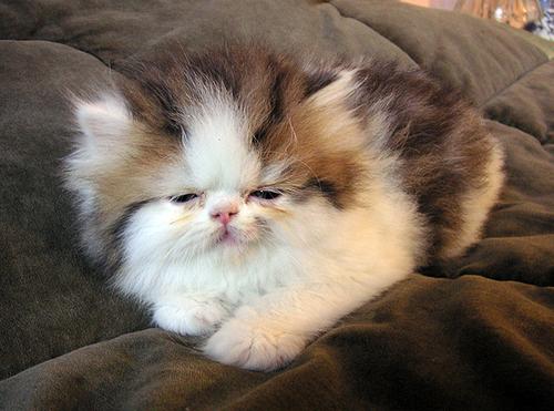 dem be some good catnip....