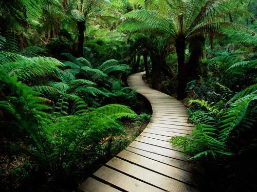 wooden-path.jpg