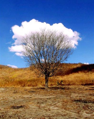 tree-cloud