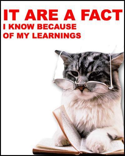 retarded-cat
