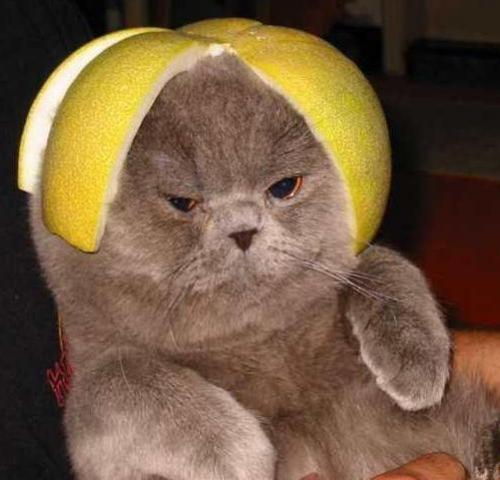 fruity cat myconfinedspace