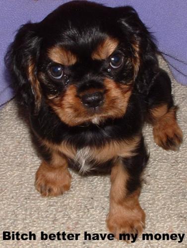 puppy_bitch.jpg