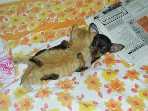 doggy kitty sex