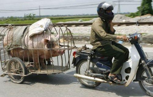 motorcycle pig cart