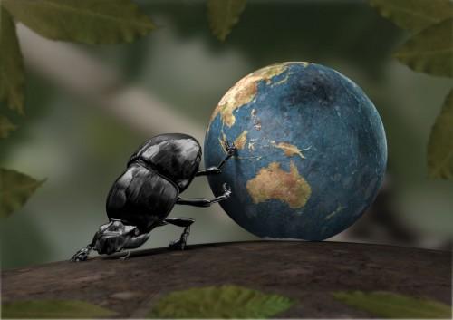 Dung Beatle Vs Earth