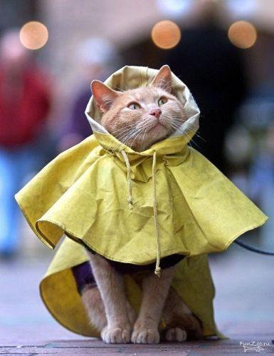 Raincoat Cat