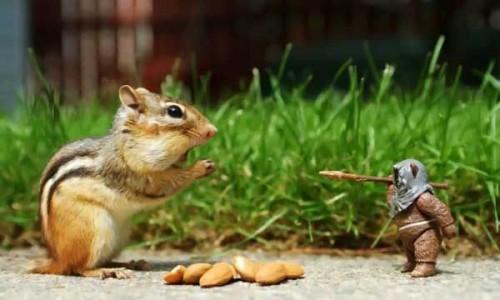 Squirrel Vs Ewok