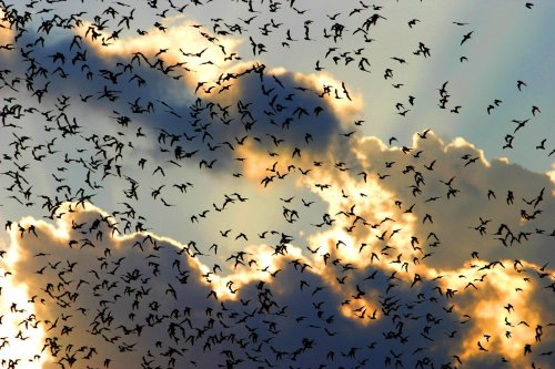 bats - thousands of them